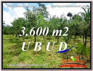 FOR SALE Beautiful PROPERTY 3,600 m2 LAND IN Ubud Tegalalang TJUB599