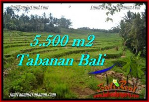 FOR SALE Magnificent 5,500 m2 LAND IN TABANAN BALI TJTB280