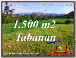 Beautiful 1,500 m2 LAND IN Tabanan Selemadeg FOR SALE TJTB353