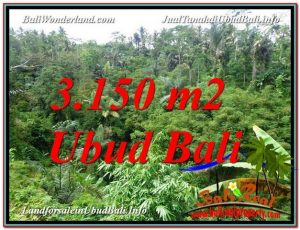 Affordable LAND FOR SALE IN Ubud Tegalalang BALI TJUB608