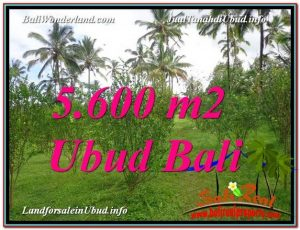FOR SALE Beautiful 5,600 m2 LAND IN UBUD BALI TJUB609