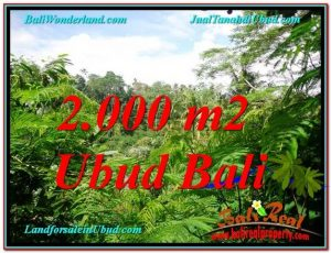 Affordable PROPERTY 2,000 m2 LAND FOR SALE IN Ubud Tegalalang TJUB611