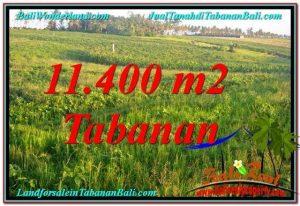 Magnificent LAND SALE IN Tabanan Selemadeg TJTB339