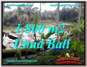 1,800 m2 LAND SALE IN UBUD TJUB616