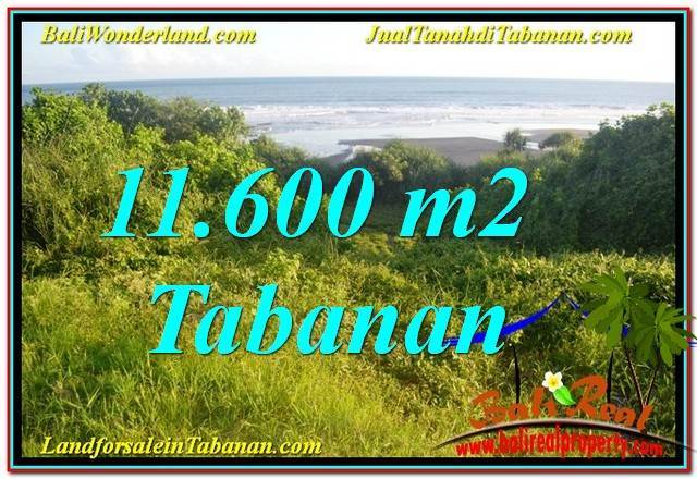 Beautiful PROPERTY 11,600 m2 LAND IN Tabanan Selemadeg BALI FOR SALE TJTB340