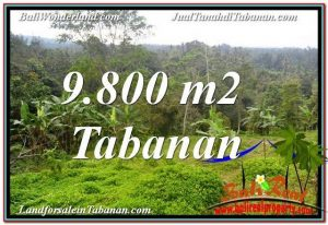 Beautiful PROPERTY 9,800 m2 LAND IN Tabanan Selemadeg BALI FOR SALE TJTB350