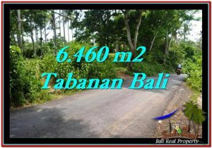 Exotic 6,460 m2 LAND SALE IN TABANAN BALI TJTB256