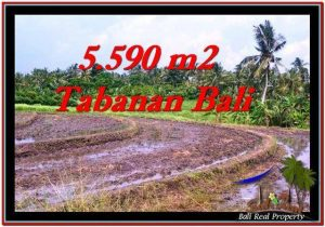FOR SALE Magnificent 5,590 m2 LAND IN TABANAN BALI TJTB257