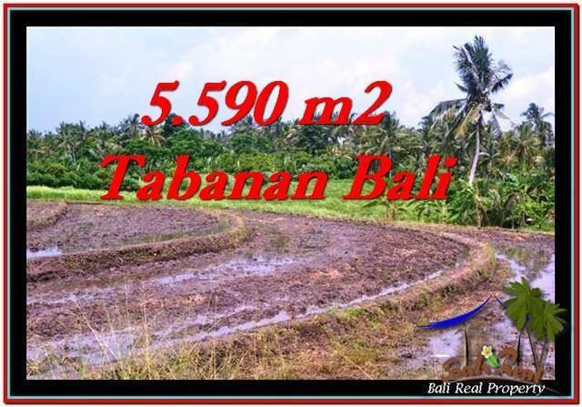 5,590 m2 LAND IN TABANAN BALI FOR SALE TJTB257
