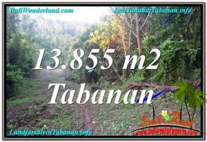FOR SALE Exotic PROPERTY 13,855 m2 LAND IN Tabanan Selemadeg TJTB335