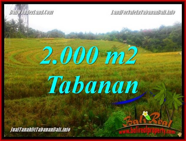 Magnificent LAND IN Tabanan Selemadeg FOR SALE TJTB356