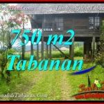 FOR SALE Affordable PROPERTY 750 m2 LAND IN Tabanan Bedugul TJTB370