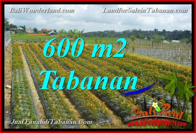Exotic PROPERTY 600 m2 LAND FOR SALE IN TABANAN Bedugul BALI TJTB372