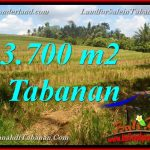 Affordable PROPERTY LAND SALE IN Tabanan Selemadeg TJTB377