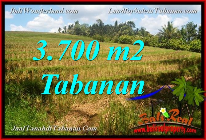FOR SALE 3,700 m2 LAND IN TABANAN BALI TJTB377
