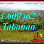 Exotic LAND IN TABANAN FOR SALE TJTB378