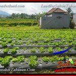 Exotic PROPERTY LAND IN Tabanan Bedugul BALI FOR SALE TJTB372