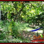 Affordable PROPERTY 4,500 m2 LAND SALE IN Tabanan Selemadeg BALI TJTB380