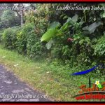 FOR SALE Affordable PROPERTY 3,000 m2 LAND IN TABANAN BALI TJTB366