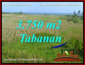 Magnificent 3,750 m2 LAND SALE IN TABANAN SELEMADEG BALI TJTB382