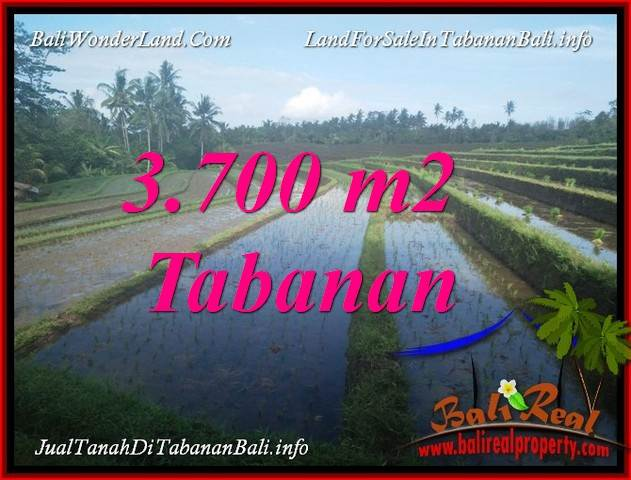 FOR SALE Affordable 3,700 m2 LAND IN TABANAN BALI TJTB388