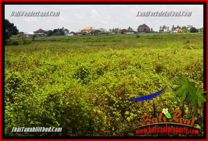 Magnificent Property 840 m2 Land sale in Lod Tunduh TJUB685