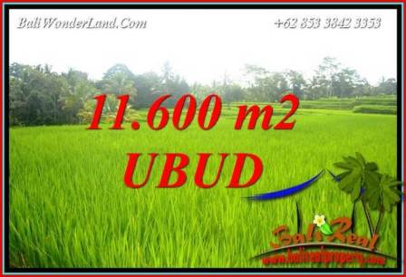 Exotic Property Land for sale in Ubud Bali TJUB732