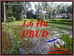 Magnificent Property Ubud Tegalalang 16,000 m2 Land for sale TJUB735