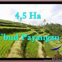 Beautiful LAND FOR SALE IN UBUD TJUB533
