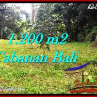 Exotic PROPERTY LAND IN TABANAN FOR SALE TJTB278