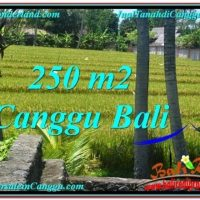 Affordable 250 m2 LAND IN CANGGU FOR SALE TJCG207