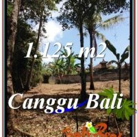 1,125 m2 LAND FOR SALE IN CANGGU TJCG208