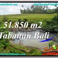 FOR SALE Exotic PROPERTY 51,850 m2 LAND IN TABANAN BALI TJTB289