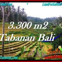 FOR SALE Beautiful PROPERTY 3,300 m2 LAND IN Tabanan Selemadeg TJTB274