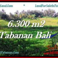 Beautiful PROPERTY 6,300 m2 LAND SALE IN Tabanan Selemadeg TJTB275