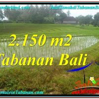 Exotic LAND FOR SALE IN Tabanan Selemadeg TJTB312