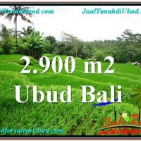 Magnificent 2,900 m2 LAND IN UBUD BALI FOR SALE TJUB564