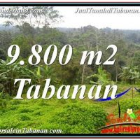 Exotic 9,800 m2 LAND FOR SALE IN Tabanan Selemadeg TJTB350