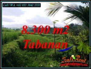 Magnificent 8,300 m2 LAND IN PENEBEL TABANAN BALI FOR SALE TJTB501