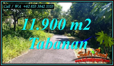Magnificent PROPERTY 11,900 m2 LAND FOR SALE IN TABANAN TJTB474